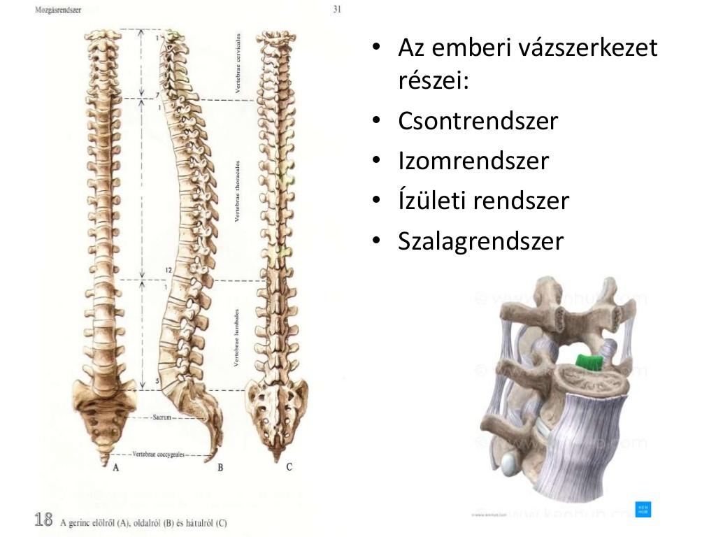 manulterpia-npi-csontkovcsols-2-1024