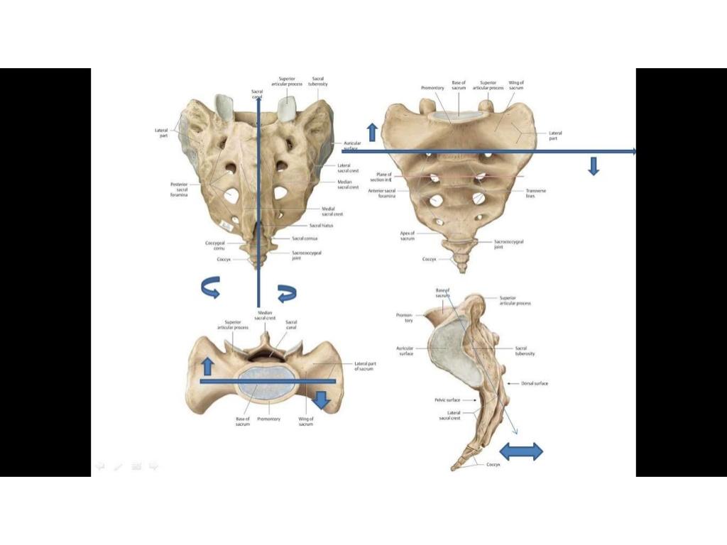 manulterpia-npi-csontkovcsols-5-1024